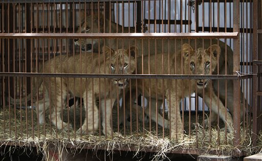 "Photo from Washington Times article ""Britain bans wild animals from traveling circuses"""