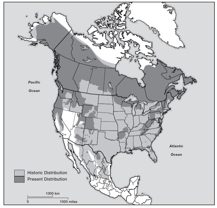 "From: American Black Bear Conservation Action Plan (Chapter 8, Figure 8.1 - page 146) ""Historic and present distribution of black bears (Ursus americanus) in North America"""